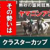 【GⅢ クラスターカップ 2019予想】勢いそのままヤマニンアンプリメから狙い撃ち!